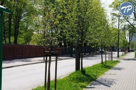 Racibórz. Prawie 1000 drzew posadzimy po 14 listopada!
