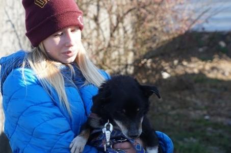 Raciborskie schronisko dla zwierząt umożliwia spacery ze swoimi psami.